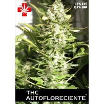 THC Autofloreciente – Pure Seeds