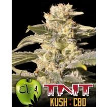 tnt-kush-cbd-eva-seeds-edicion-limitada