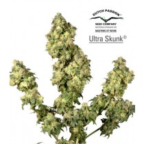 Ultra Skunk – Dutch Passion