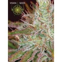 Northern Lights – Vision Seeds