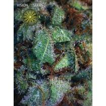 NY Diesel – Vision Seeds