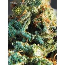 Silver Haze – Vision Seeds