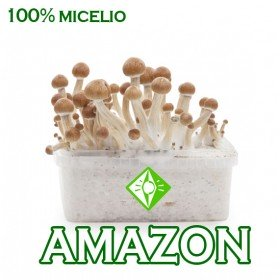 KIT SETAS AMAZONIA MICELIO 100%