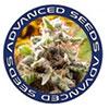 advanced-seeds