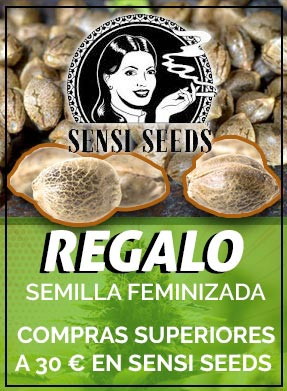 Regalos semillas