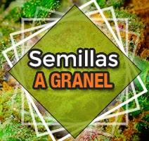 Semillas marihuana a granel